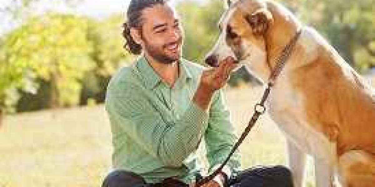 Why You Need To Be Assured Before Using Pet Friendly Rehabs?